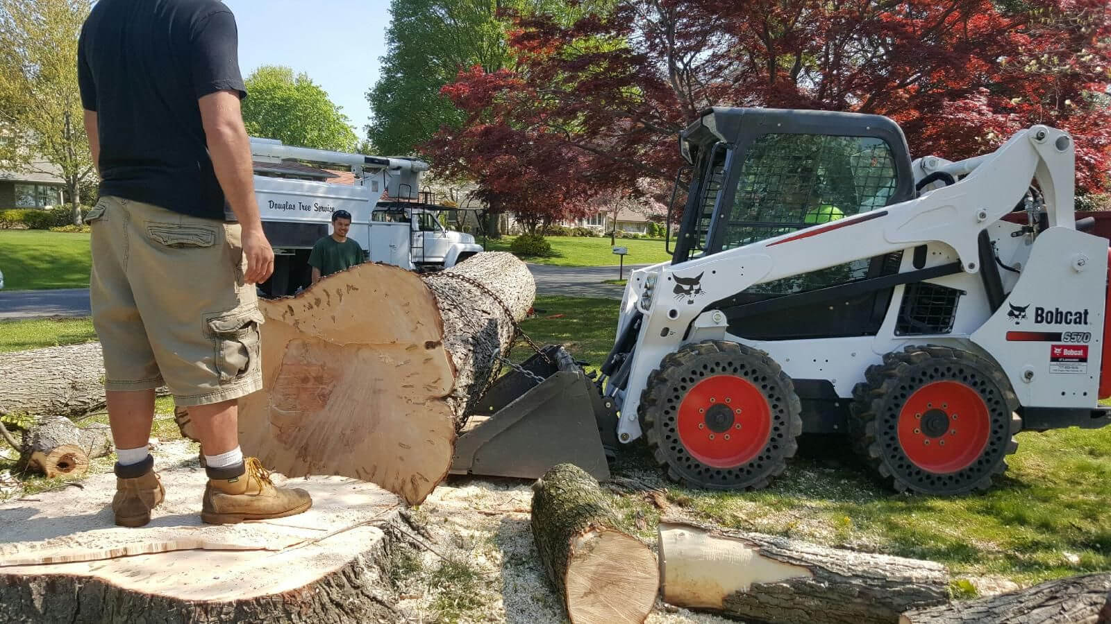 Carlsbad-San Diego County CA Tree Trimming and Stump Grinding Services-We Offer Tree Trimming Services, Tree Removal, Tree Pruning, Tree Cutting, Residential and Commercial Tree Trimming Services, Storm Damage, Emergency Tree Removal, Land Clearing, Tree Companies, Tree Care Service, Stump Grinding, and we're the Best Tree Trimming Company Near You Guaranteed!