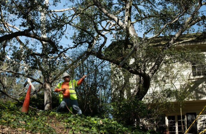 Chula Vista-San Diego County CA Tree Trimming and Stump Grinding Services-We Offer Tree Trimming Services, Tree Removal, Tree Pruning, Tree Cutting, Residential and Commercial Tree Trimming Services, Storm Damage, Emergency Tree Removal, Land Clearing, Tree Companies, Tree Care Service, Stump Grinding, and we're the Best Tree Trimming Company Near You Guaranteed!