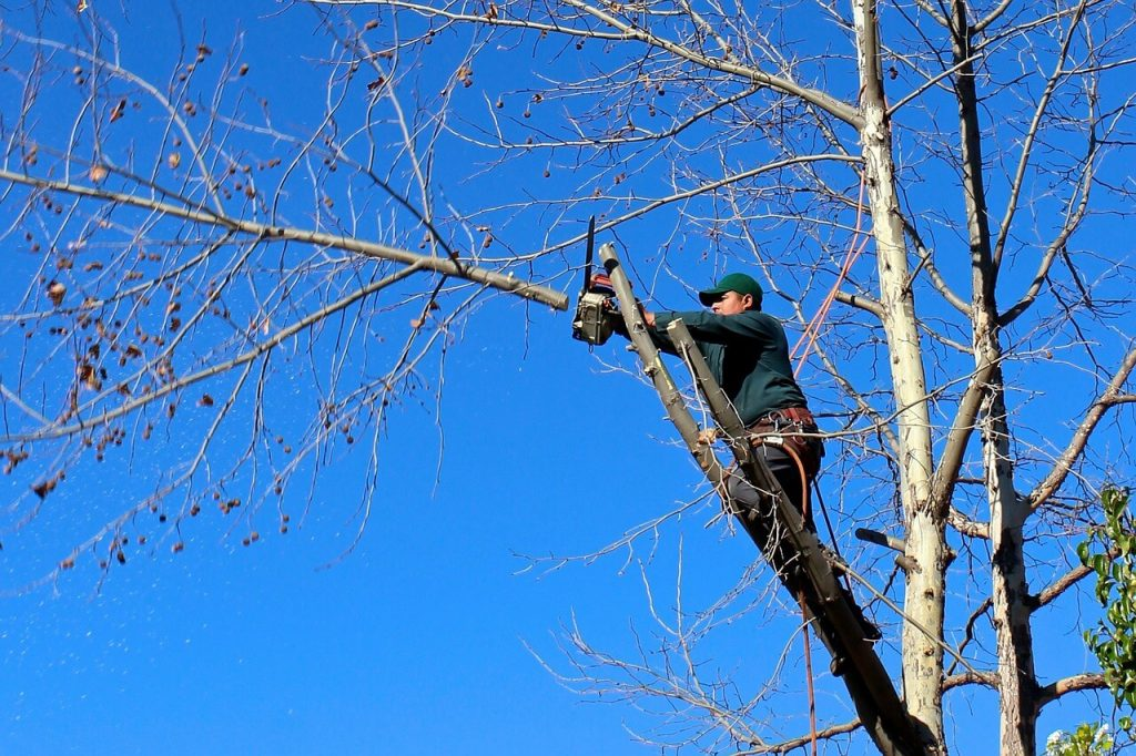 Contact Us-San Diego County CA Tree Trimming and Stump Grinding Services-We Offer Tree Trimming Services, Tree Removal, Tree Pruning, Tree Cutting, Residential and Commercial Tree Trimming Services, Storm Damage, Emergency Tree Removal, Land Clearing, Tree Companies, Tree Care Service, Stump Grinding, and we're the Best Tree Trimming Company Near You Guaranteed!