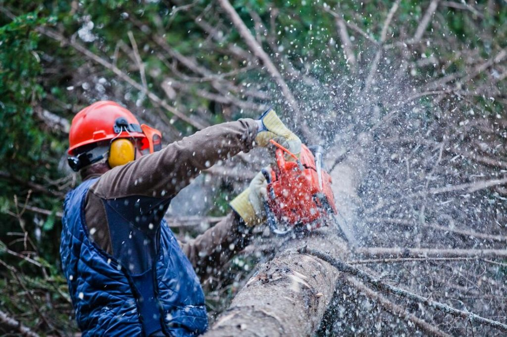 El Cajon-San Diego County CA Tree Trimming and Stump Grinding Services-We Offer Tree Trimming Services, Tree Removal, Tree Pruning, Tree Cutting, Residential and Commercial Tree Trimming Services, Storm Damage, Emergency Tree Removal, Land Clearing, Tree Companies, Tree Care Service, Stump Grinding, and we're the Best Tree Trimming Company Near You Guaranteed!