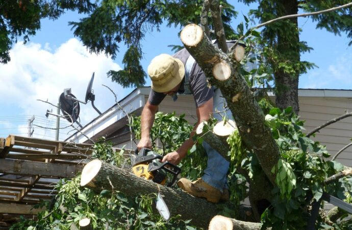 Encinitas-San Diego County CA Tree Trimming and Stump Grinding Services-We Offer Tree Trimming Services, Tree Removal, Tree Pruning, Tree Cutting, Residential and Commercial Tree Trimming Services, Storm Damage, Emergency Tree Removal, Land Clearing, Tree Companies, Tree Care Service, Stump Grinding, and we're the Best Tree Trimming Company Near You Guaranteed!