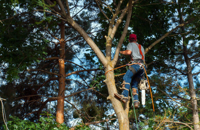Escondido-San Diego County CA Tree Trimming and Stump Grinding Services-We Offer Tree Trimming Services, Tree Removal, Tree Pruning, Tree Cutting, Residential and Commercial Tree Trimming Services, Storm Damage, Emergency Tree Removal, Land Clearing, Tree Companies, Tree Care Service, Stump Grinding, and we're the Best Tree Trimming Company Near You Guaranteed!