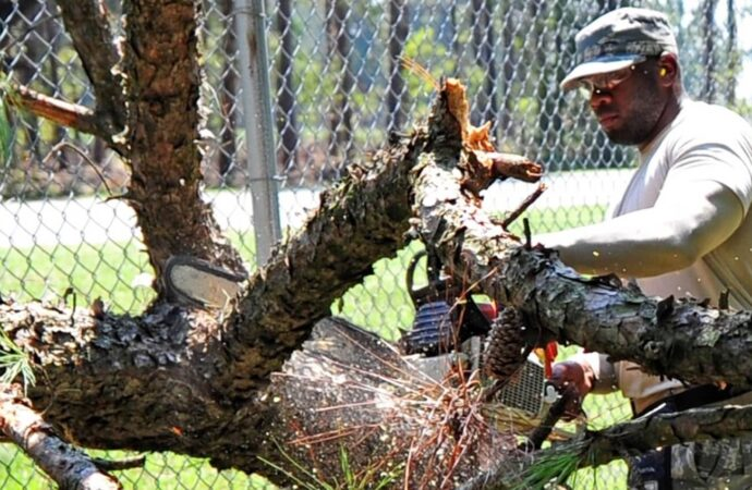 Imperial Beach-San Diego County CA Tree Trimming and Stump Grinding Services-We Offer Tree Trimming Services, Tree Removal, Tree Pruning, Tree Cutting, Residential and Commercial Tree Trimming Services, Storm Damage, Emergency Tree Removal, Land Clearing, Tree Companies, Tree Care Service, Stump Grinding, and we're the Best Tree Trimming Company Near You Guaranteed!