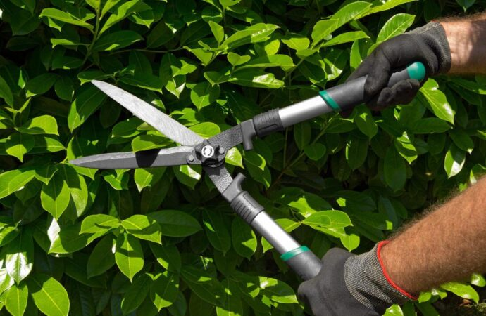 La Mesa-San Diego County CA Tree Trimming and Stump Grinding Services-We Offer Tree Trimming Services, Tree Removal, Tree Pruning, Tree Cutting, Residential and Commercial Tree Trimming Services, Storm Damage, Emergency Tree Removal, Land Clearing, Tree Companies, Tree Care Service, Stump Grinding, and we're the Best Tree Trimming Company Near You Guaranteed!