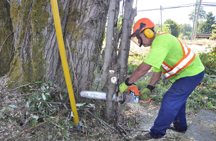 Lemon Groves-San Diego County CA Tree Trimming and Stump Grinding Services-We Offer Tree Trimming Services, Tree Removal, Tree Pruning, Tree Cutting, Residential and Commercial Tree Trimming Services, Storm Damage, Emergency Tree Removal, Land Clearing, Tree Companies, Tree Care Service, Stump Grinding, and we're the Best Tree Trimming Company Near You Guaranteed!