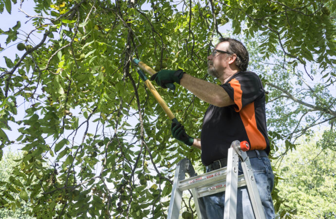 National City-San Diego County CA Tree Trimming and Stump Grinding Services-We Offer Tree Trimming Services, Tree Removal, Tree Pruning, Tree Cutting, Residential and Commercial Tree Trimming Services, Storm Damage, Emergency Tree Removal, Land Clearing, Tree Companies, Tree Care Service, Stump Grinding, and we're the Best Tree Trimming Company Near You Guaranteed!