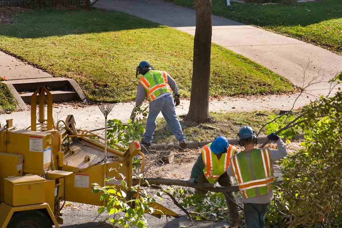 Oceanside-San Diego County CA Tree Trimming and Stump Grinding Services-We Offer Tree Trimming Services, Tree Removal, Tree Pruning, Tree Cutting, Residential and Commercial Tree Trimming Services, Storm Damage, Emergency Tree Removal, Land Clearing, Tree Companies, Tree Care Service, Stump Grinding, and we're the Best Tree Trimming Company Near You Guaranteed!