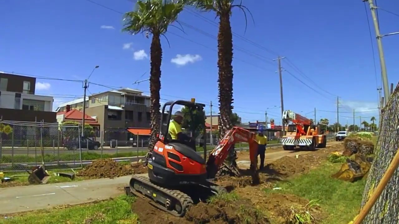 Palm Tree Removal-San Diego County CA Tree Trimming and Stump Grinding Services-We Offer Tree Trimming Services, Tree Removal, Tree Pruning, Tree Cutting, Residential and Commercial Tree Trimming Services, Storm Damage, Emergency Tree Removal, Land Clearing, Tree Companies, Tree Care Service, Stump Grinding, and we're the Best Tree Trimming Company Near You Guaranteed!