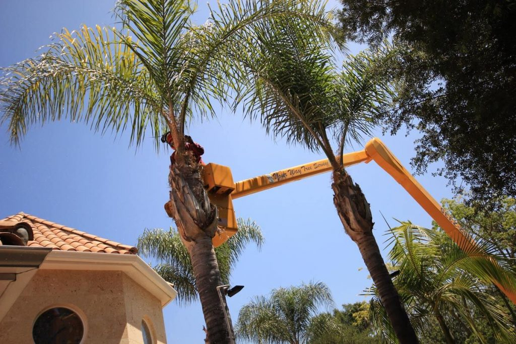 Palm Tree Trimming-San Diego County CA Tree Trimming and Stump Grinding Services-We Offer Tree Trimming Services, Tree Removal, Tree Pruning, Tree Cutting, Residential and Commercial Tree Trimming Services, Storm Damage, Emergency Tree Removal, Land Clearing, Tree Companies, Tree Care Service, Stump Grinding, and we're the Best Tree Trimming Company Near You Guaranteed!