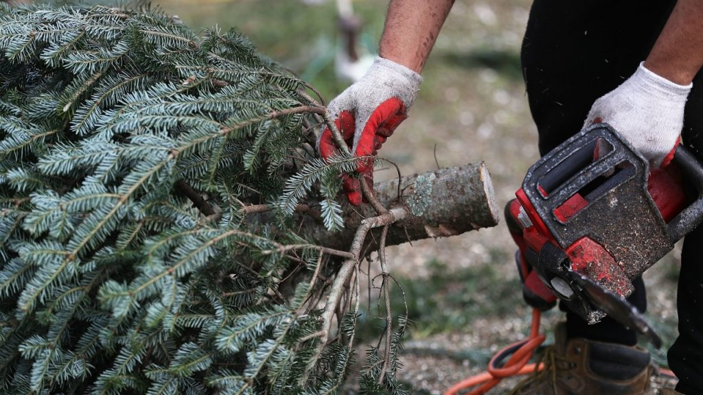 San Marcos-San Diego County CA Tree Trimming and Stump Grinding Services-We Offer Tree Trimming Services, Tree Removal, Tree Pruning, Tree Cutting, Residential and Commercial Tree Trimming Services, Storm Damage, Emergency Tree Removal, Land Clearing, Tree Companies, Tree Care Service, Stump Grinding, and we're the Best Tree Trimming Company Near You Guaranteed!