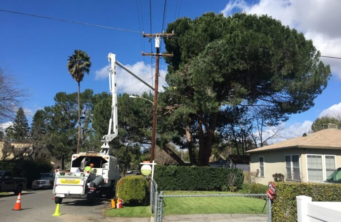 Santee-San Diego County CA Tree Trimming and Stump Grinding Services-We Offer Tree Trimming Services, Tree Removal, Tree Pruning, Tree Cutting, Residential and Commercial Tree Trimming Services, Storm Damage, Emergency Tree Removal, Land Clearing, Tree Companies, Tree Care Service, Stump Grinding, and we're the Best Tree Trimming Company Near You Guaranteed!