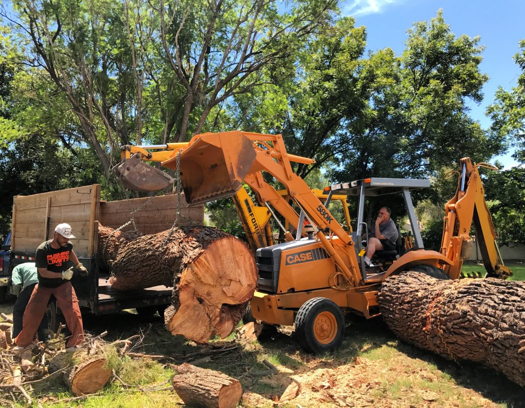 Solana Beach-San Diego County CA Tree Trimming and Stump Grinding Services-We Offer Tree Trimming Services, Tree Removal, Tree Pruning, Tree Cutting, Residential and Commercial Tree Trimming Services, Storm Damage, Emergency Tree Removal, Land Clearing, Tree Companies, Tree Care Service, Stump Grinding, and we're the Best Tree Trimming Company Near You Guaranteed!