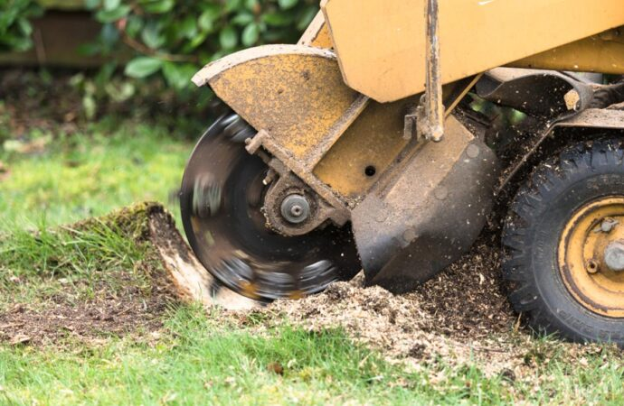 Stump Grinding-San Diego County CA Tree Trimming and Stump Grinding Services-We Offer Tree Trimming Services, Tree Removal, Tree Pruning, Tree Cutting, Residential and Commercial Tree Trimming Services, Storm Damage, Emergency Tree Removal, Land Clearing, Tree Companies, Tree Care Service, Stump Grinding, and we're the Best Tree Trimming Company Near You Guaranteed!