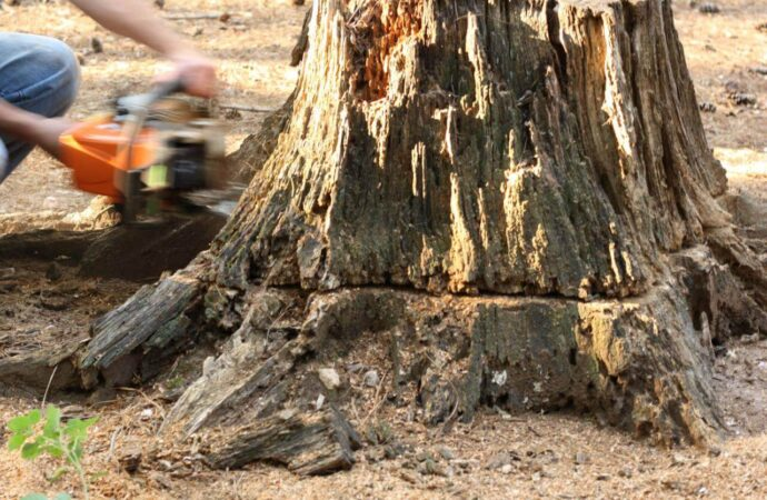 Stump Removal-San Diego County CA Tree Trimming and Stump Grinding Services-We Offer Tree Trimming Services, Tree Removal, Tree Pruning, Tree Cutting, Residential and Commercial Tree Trimming Services, Storm Damage, Emergency Tree Removal, Land Clearing, Tree Companies, Tree Care Service, Stump Grinding, and we're the Best Tree Trimming Company Near You Guaranteed!