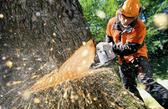 Tree Cutting-San Diego County CA Tree Trimming and Stump Grinding Services-We Offer Tree Trimming Services, Tree Removal, Tree Pruning, Tree Cutting, Residential and Commercial Tree Trimming Services, Storm Damage, Emergency Tree Removal, Land Clearing, Tree Companies, Tree Care Service, Stump Grinding, and we're the Best Tree Trimming Company Near You Guaranteed!
