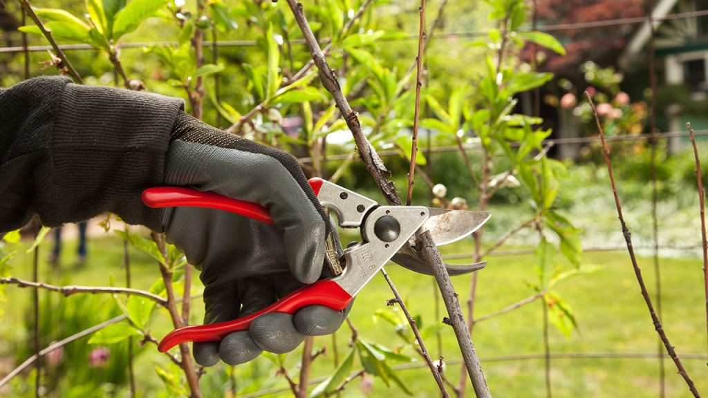 Tree Pruning-San Diego County CA Tree Trimming and Stump Grinding Services-We Offer Tree Trimming Services, Tree Removal, Tree Pruning, Tree Cutting, Residential and Commercial Tree Trimming Services, Storm Damage, Emergency Tree Removal, Land Clearing, Tree Companies, Tree Care Service, Stump Grinding, and we're the Best Tree Trimming Company Near You Guaranteed!