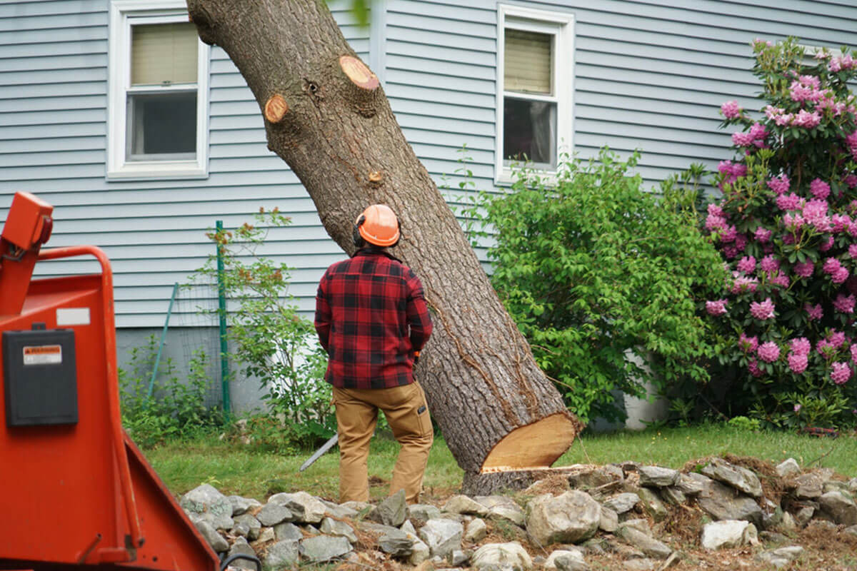 Tree Removal-San Diego County CA Tree Trimming and Stump Grinding Services-We Offer Tree Trimming Services, Tree Removal, Tree Pruning, Tree Cutting, Residential and Commercial Tree Trimming Services, Storm Damage, Emergency Tree Removal, Land Clearing, Tree Companies, Tree Care Service, Stump Grinding, and we're the Best Tree Trimming Company Near You Guaranteed!