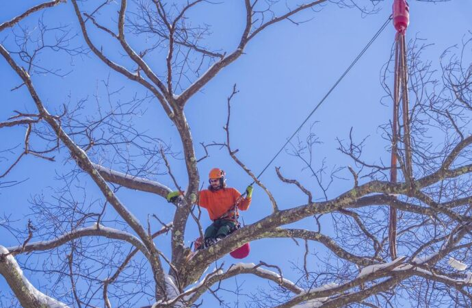Vista-San Diego County CA Tree Trimming and Stump Grinding Services-We Offer Tree Trimming Services, Tree Removal, Tree Pruning, Tree Cutting, Residential and Commercial Tree Trimming Services, Storm Damage, Emergency Tree Removal, Land Clearing, Tree Companies, Tree Care Service, Stump Grinding, and we're the Best Tree Trimming Company Near You Guaranteed!